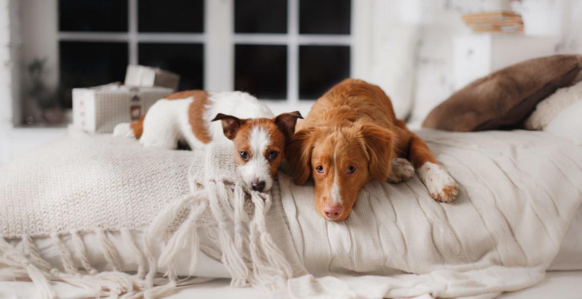 einfach wau 7 apps die jeder hundehalter haben sollte. Black Bedroom Furniture Sets. Home Design Ideas